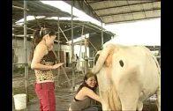 หนังโป๊xxx เย็ดสองสาวเด็กเเเลี้ยงวัว